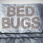 Bed Bug problem in Mississauga