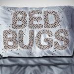 Bed Bug problem in Mississauga