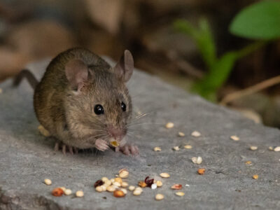 Mouse-Control-Service-In-MISSISSAUGA